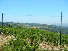 mountain vineyards