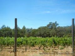 Sky vineyards