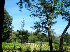 hilltop vineyards