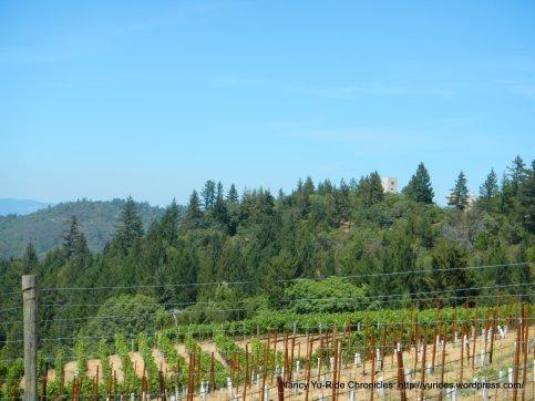 Wing Canyon vineyards