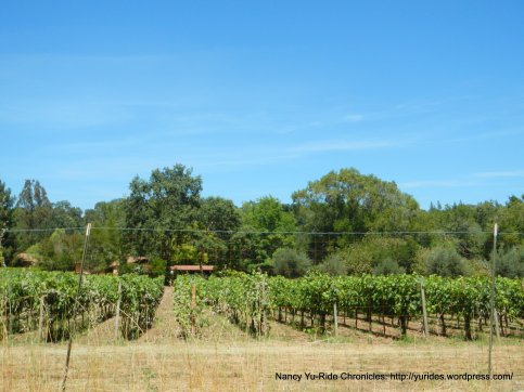 Redwood Rd vineyards