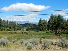 valley pastures