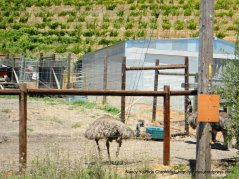 Alhambra Valley emus