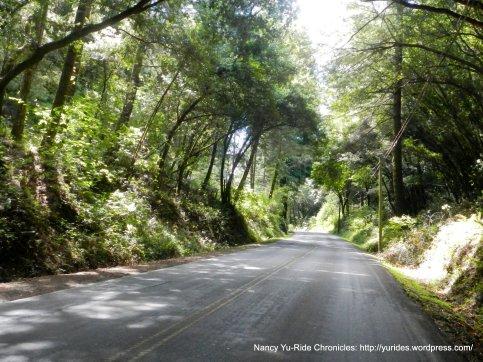 shaded woodland