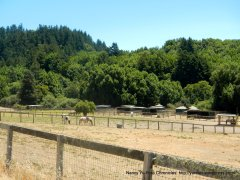 valley horse ranch