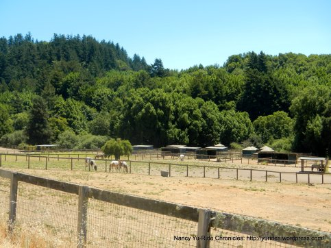 valley horse ranch