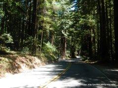 Lucas valley redwoods