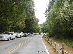 Muir Woods Rd