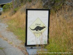Otter Xing