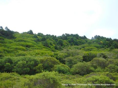 dense greens
