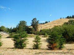 Martinez hills