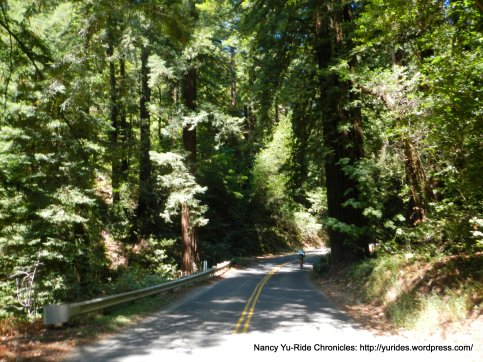 Pinehurst Rd-redwoods