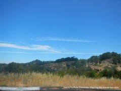 berkeley Hills landscape