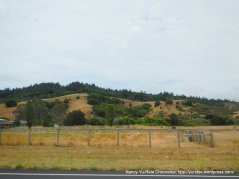 open grasslands-meadows
