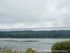 tomales bay oyster beds