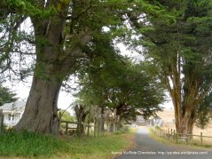 tree lined road to ranch
