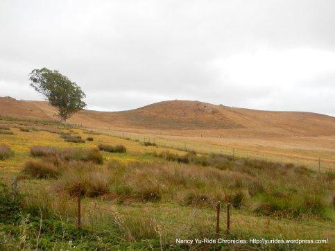 open rolling hills