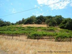 hillside vineyard