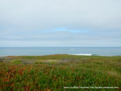 coastal shore