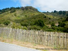 Purisima Creek Rd-