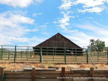 open cattle barn