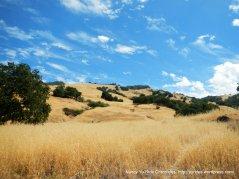 golden mountain slopes