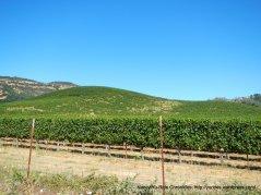 wooden valley vineyards