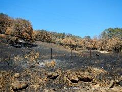 charred hills