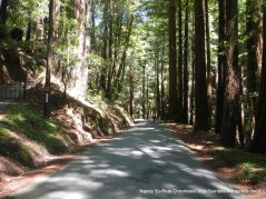 Tunitas creek rd