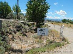 Toler Ave sheep ranch