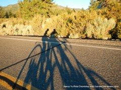 fun shadows