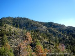 Toiyabe Forest