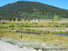 grassy river meadow