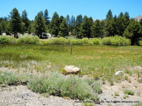 Hope Valley meadow