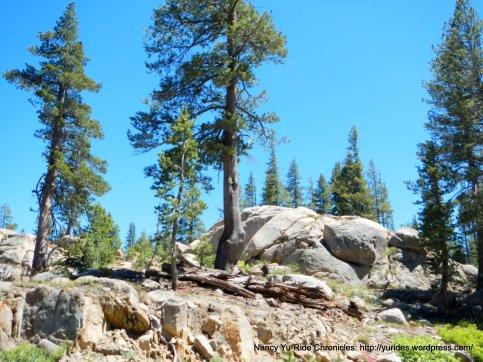 alpine rocks