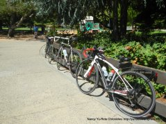 at Moraga Commons Park
