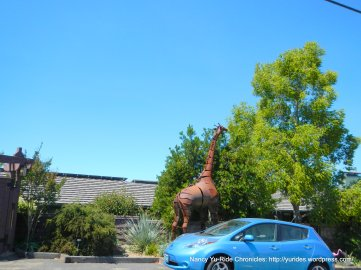 outdoor giraffe