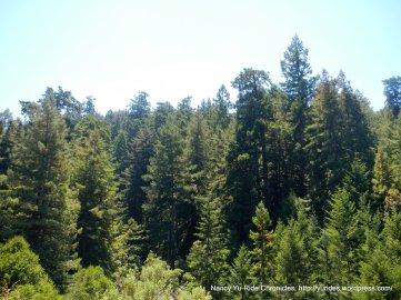 Sam McDonald forest