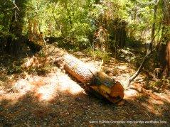 fell redwood