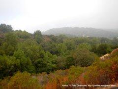 dense woodlands