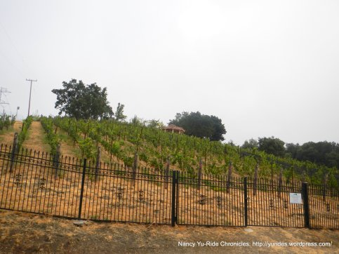 mt eden vineyards