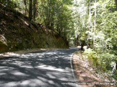 big basin way dappled sunlight