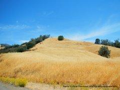 golde n slopes