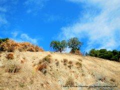 marin hills