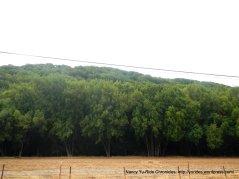 dense woods