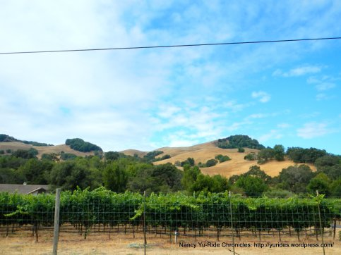 novato blvd vineyard