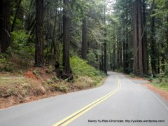 into the redwoods
