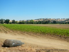 farm lands