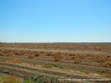 putah creek rd-tomato field