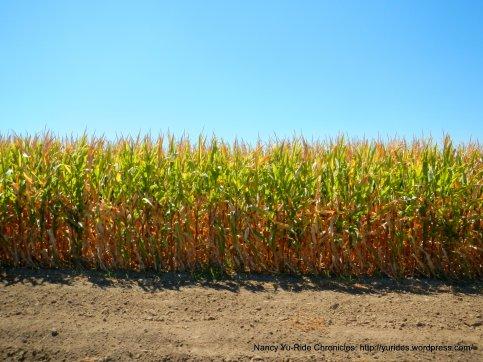 corn fields sweeney rd